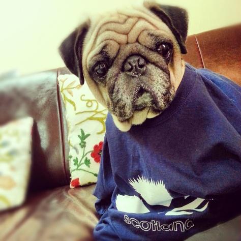 Dobbie Pug Scotland Team