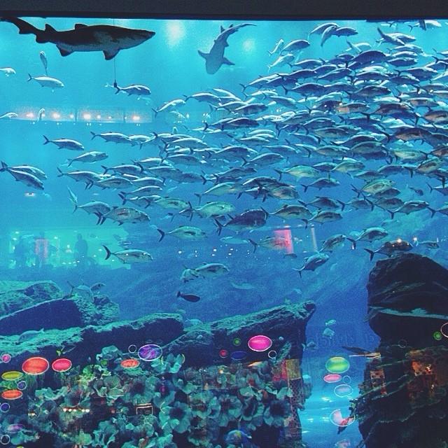 Dubai mall aquarium fish list for Aquarium fish list